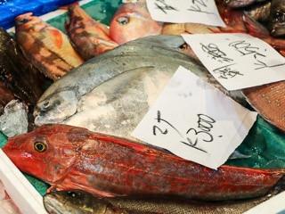 Tokyo Fish Market Tour
