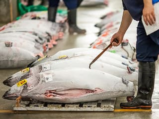 Tsukiji Tuna Auction Tour