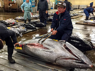 VIP Tsukiji Tuna Auction Insider Tour