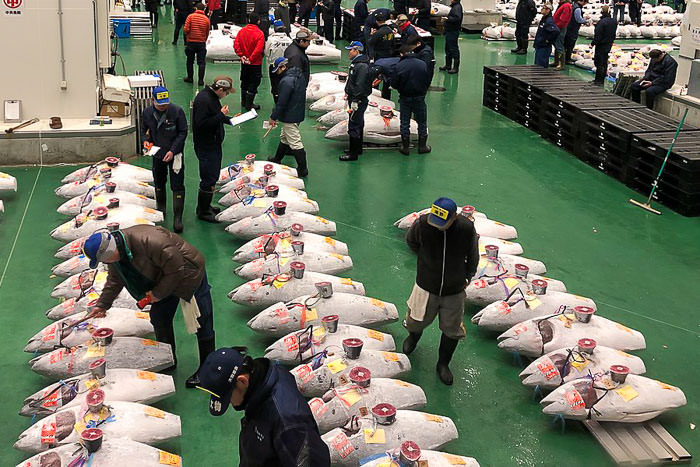Toyosu Market tuna auction