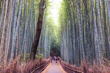 Arashiyama Food Walking Tour